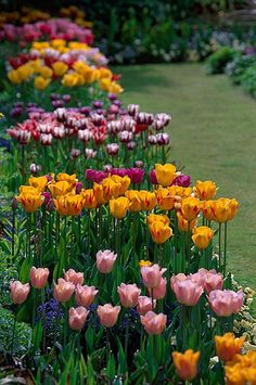 spring in the sunken garden, Chenies Manor Garden, Buckinghamshire, England