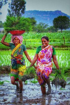 Indian women working in the paddy field Village Photography, Indian Photography, Farm Photography, Essence Of India, Village Girl, Art Village, Kerala Backwaters, India Street, Female Farmer