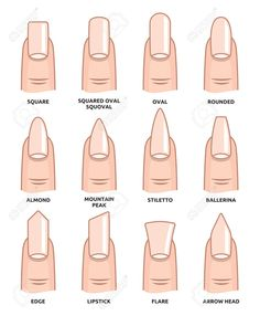 Illustration of Different nail shapes Fingernails fashion Trends vector art clipart and stock vectors. Image The post Illustration of Different nail shapes Fingernails fashion Trends vector art c appeared first on nageldesign. Aycrlic Nails, Cute Nails, Pretty Nails, Nail Nail, Cute Fall Nails, Cute Summer Nails, Matte Nail Polish, Stiletto Nails, Summer Acrylic Nails