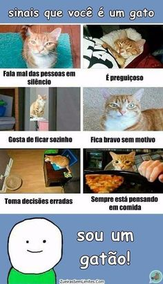 Me identifico 😂😂 Funny Photos, Funny Images, Memes Status, Funny Phrases, Just Smile, Wtf Funny, Funny Moments, Bts Memes, I Love Cats