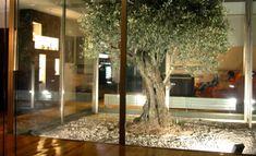 http://www.planos-de-casas.net/2013/09/patios-de-luz-espacios-naturales-que-dan-importancia-a-la-casa.html