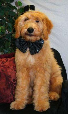 He almost looks like Tiffany's dog Shipley!