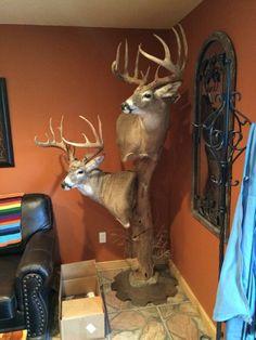 Double buck mount
