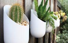 decorar paredes con plantas