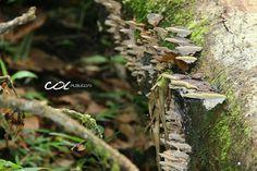 Robledales en la Reserva Natural de Río Blanco, Manizales, Colombia