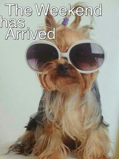 The weekend has arrived cute dog weekend quotes weekend is here funny weekend images Saturday Morning Quotes, Happy Weekend Quotes, Happy Morning Quotes, Weekend Humor, Monday Humor, Its Friday Quotes, Saturday Memes, Happy Weekend Images, Funny Morning