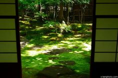 真夏のお庭