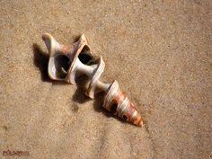 Шпалери для телефона - Мушлі: http://wallpapic.com.ua/ocean-and-sea/shells/wallpaper-10244