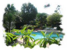 pool landscape idea - plumeria