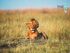 pub Timotei - Les meilleures publicités mettant en scène les animaux http://www.idole.net/publicite/publicites-animaux.html