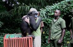 溫馨一抱!黑猩猩野放前 回頭緊擁救命恩人 | ETtoday新奇新聞 | ETtoday 新聞雲
