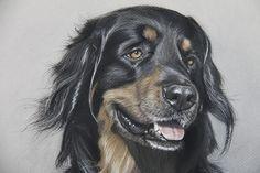 Dog art by Amy Little.  Bond, 2014.  Soft pastel on paper.