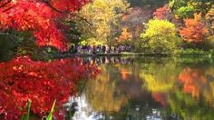"""Amazing images this should be shared great quality...  """"Autumnal leaves in the cloud field pond in Karuizawa is now in full bloom, only there is a variation of autumn leaves by trees this year autu... http://beartales.me/2015/10/20/cloud-field-pond-karuizawa-2015-%C2%B7-4k-shooting-of-autumn-leaves/"""