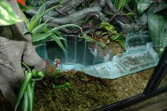 Lazy River Tank DIY Journal: This is a Poison Dart Frog tank that I have been designing in my mind for Gecko Terrarium, Reptile Terrarium, Garden Terrarium, Terrarium Ideas, Reptile Room, Reptile Cage, Reptiles, Lizards, Snakes