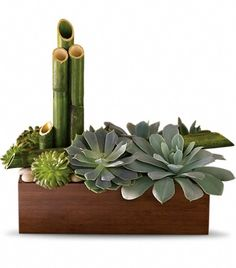 """Peaceful Zen Garden - Thirsting for a gift that is contemporary, beautiful and inspires a soothing sense of calm? Look no further than this exclusive Zen garden. A bamboo planter of stunning succulents, it's super-low-maintenance. It's awesome for an office and in perfect harmony at home.  A mix of succulent plants are arranged with river cane and river rocks in a large brown or natural color bamboo container. Approximately 13"""" W x 12"""" H and 6"""" deep."""