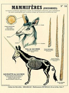 The Unicorn / Unicorn print - Curiosity cabinet poster Deyrolle by the artist Camille Renversade Unicorn Print, Mythological Creatures, Magical Creatures, Creature Design, Fantastic Beasts, Animal Drawings, Mythology, Fantasy Art, Animals