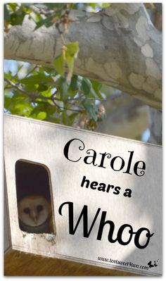 Carole Hears a Whoo