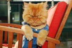 Meest boze kat op aarde Bekijk de 10 foto's - GrapjeBedankt.nl