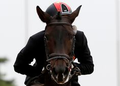 China's Liang Ruiji riding Vasthi performs during the eventing individual and team jumping final at the Dream Park Equestrian Venue during the Asian Games in Incheon September (REUTERS/Kim Kyung-Hoon) Horse Spirit Animal, Asian Games, English Riding, Image Of The Day, Fun Shots, Show Jumping, Sports Photos, Cross Country, Cool Photos