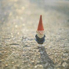 Trust the gnomes
