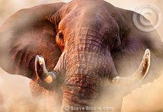Image result for charging elephant artwork