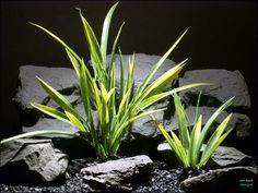 aquarium or reptile enclosure terrarium plant: arrowhead grass parp060 plstc.  www.ronbeckdesigns.com  #ron_beck_designs