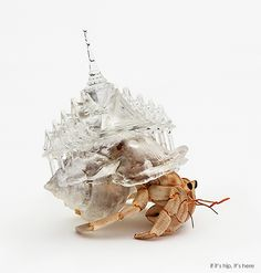 Hermit Crabs Don 3D-Printed Cityscapes as Shells for a Project about Migration. | http://www.ifitshipitshere.com/hermit-crabs-don-3d-printed-cityscapes-shells-project-migration/