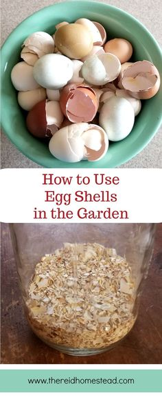 How to Use Egg Shells in the Garden-Learn the different ways you can use your egg shells to benefit your garden plants! Repurpose your eggshells into garden fertilizer! diy garden tips How to Use Eggshells in the Garden (to benefit your plants Herb Garden, Garden Beds, Garden Care, Garden Soil, Glass Garden, Edible Garden, Gardening For Beginners, Gardening Tips, Gardening Courses