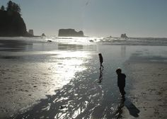 Olympic National Park features multiple campgrounds and has miles of coast and rainforest trails.