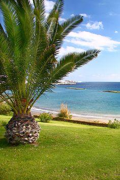Esta es Costa Adeje, #Tenerife. Palmeras playas y pura naturaleza- Canary Island