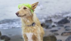 Never lose a dog with Whistle GPS tracker for pets. #IOT #Dogs #tracker