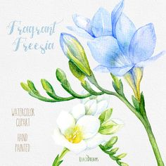 Freesia Flowers Hand Painted Clipart Watercolor. by ReachDreams