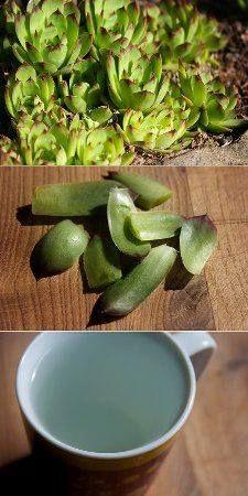 Natural Treatments, Natural Remedies, Weight Loss Detox, Healing Herbs, Health Advice, Alternative Medicine, Natural Medicine, Organic Beauty, Aloe Vera