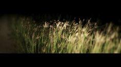 Light of Night on Vimeo