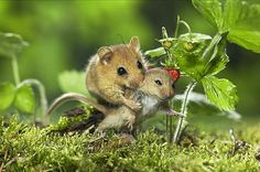 Mouse Love..... lol