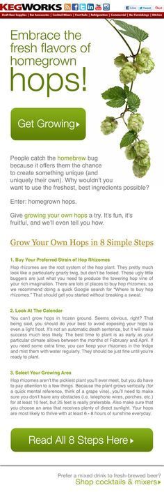 Grow Your Own Hops in 8 Simple Steps