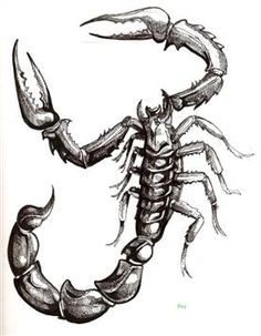 I'm a Scorpio so I have been looking for a good Scorpion Tattoo. I like this.