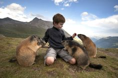 Marmot Boy Is FRIENDS WITH MARMOTS // This kid is like the marmot messiah, or something.