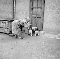 © Bill Perlmutter - Naughty Dog, Germany, 1956