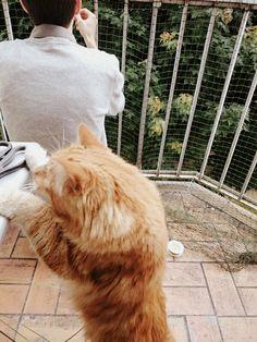 Pixel Le Chat vous raconte ses vacances d'été dans le blog ! Chat bricole ! ^^ #cats #lovecats #lotsofcats Blog Chat, Photo Chat, Pixel, Shag Rug, Lol, Rugs, Photos, Shaggy Rug, Farmhouse Rugs