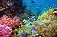 Coral reef images - Google Search