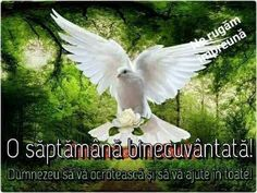 Condolences Quotes, Dove Pictures, My Love Story, Garden Sculpture, Paradise, Birds, World, Flowers, Animals