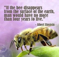save the bees--save humanity
