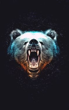 #bear