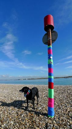 Eastney – 1st Yarnbomb with Twm in knitted collar by Claire Sambrook