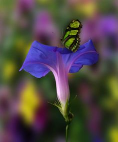 "Green & Black butterfly on Violet & Blue flower  Source: I Acknowledge Beauty Exists (Fb)  Source: ""2689 by peter holme iii"" via 500px.com"