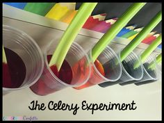 Classroom Confetti: Science Experiments. Great experiment to see the parts of a plant. The Celery Experiment.