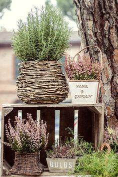 Grow rosemary in basket year round Love Garden, Dream Garden, Home And Garden, Garden Cottage, Garden Bulbs, Garden Pots, Pot Jardin, Garden Projects, Garden Inspiration