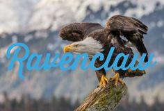 Bald Eagle, Bird, Fun, Animals, Animais, Animales, Animaux, Animal, Birds
