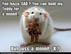 funny pictures - Yoo hazza SAD ? Yoo can hold my Teddy for a minnit .
